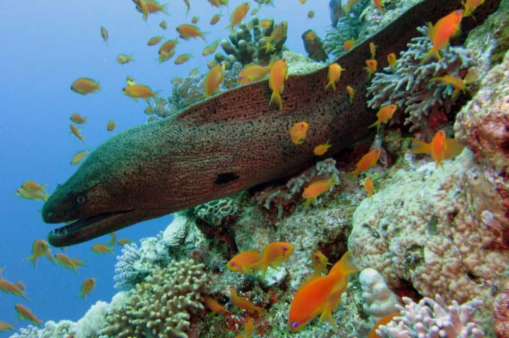 Red sea diving safaris