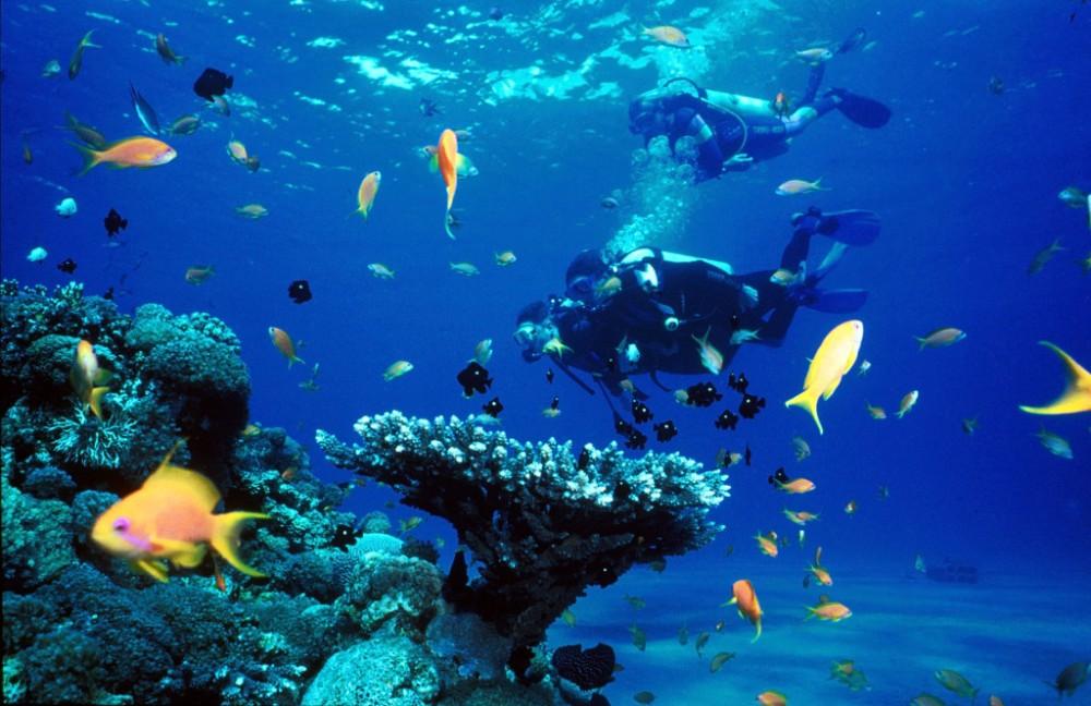 Eilat01_diving