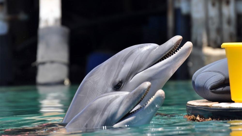 Eilat06_dolphinsы