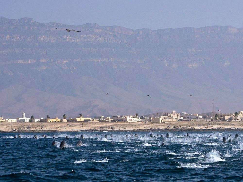 middle_east_oman_trip_saman_explorer_gallery_dolphins
