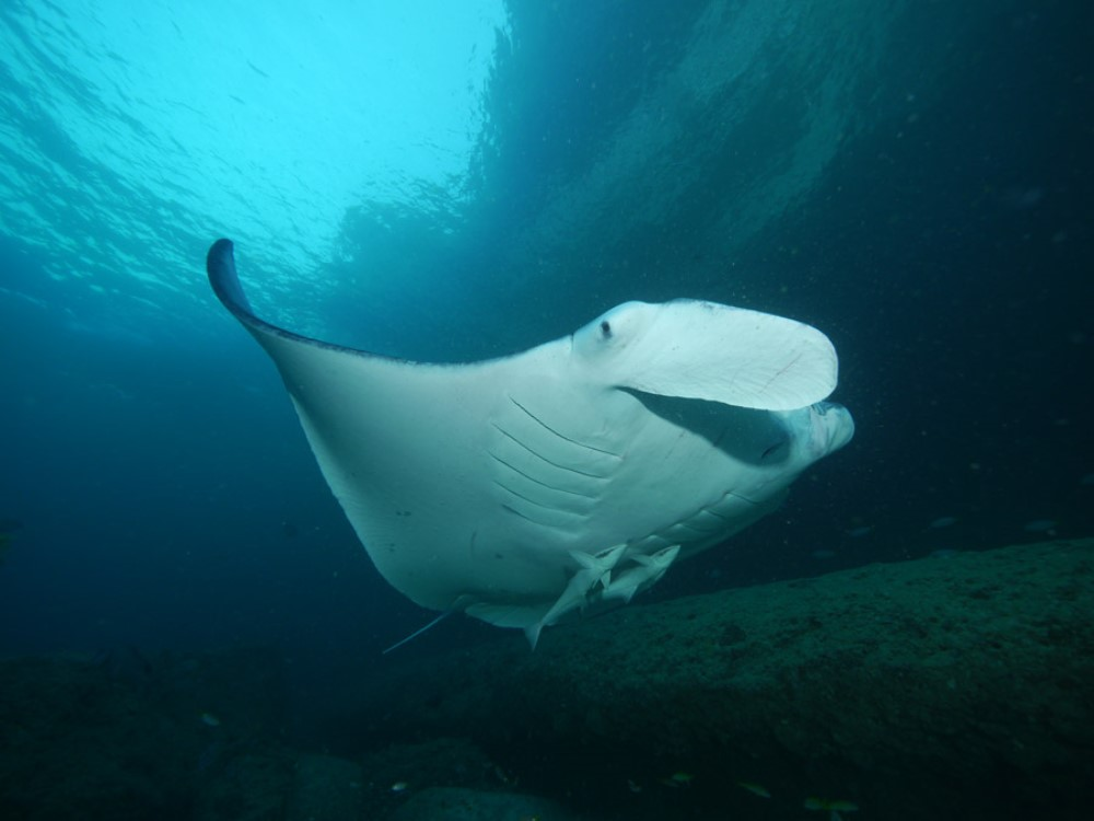 middle_east_oman_trip_saman_explorer_gallery_manta2
