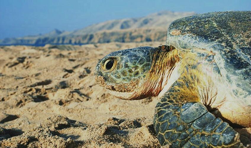 turtle_cnt_24may10_istock_b
