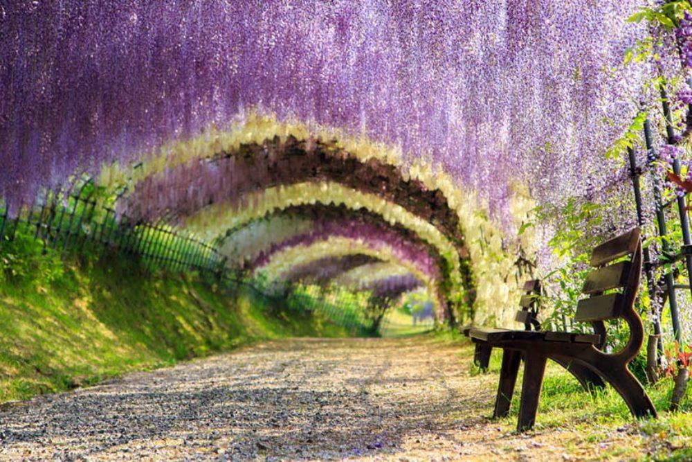 Kawachi_Fuji_garden-01